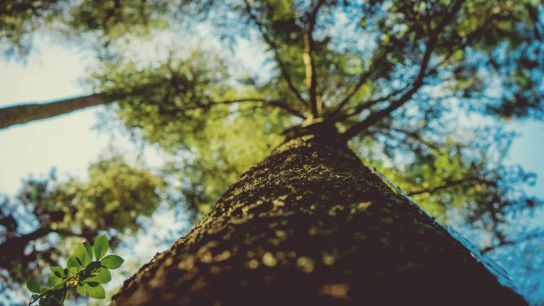 tree-services-nearme