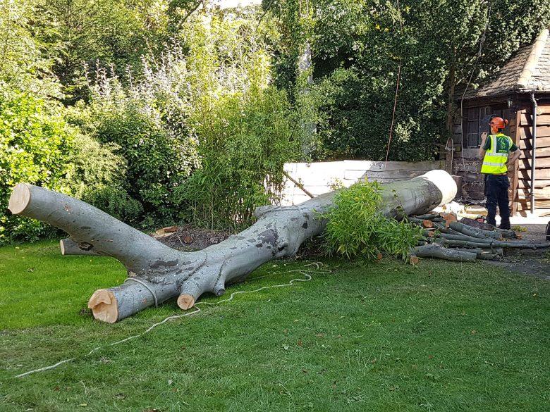 Tree-surgeons-near-me