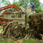 tree removal near me reviews