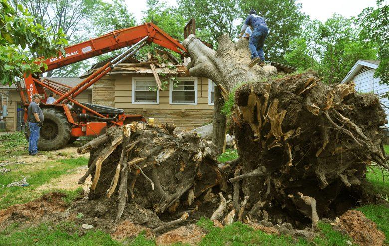 tree removal near me reviews